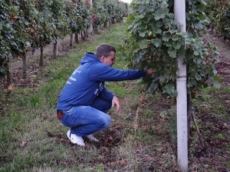 Dragos Galbur viticultor