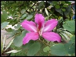 Malaysia, Kuala Lumpur, Pretty Flower, 19 September 2012 (1)