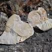 Fossiles de l'Altmühltal