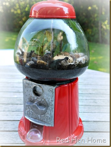 Red Hen Home Gumball Terrarium 9