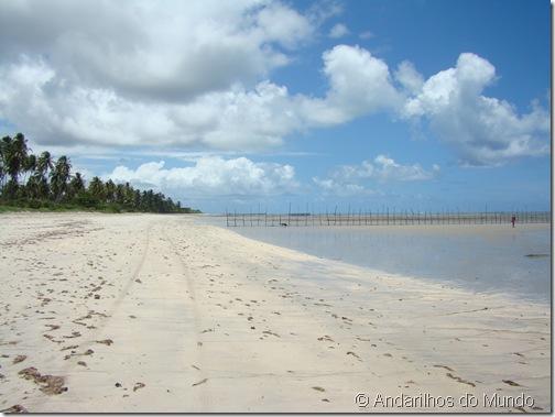 Praia de São Miguel dos Milagres Alagoas Panorama