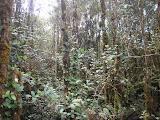 The vegetation near Pangulubao trig point (Daniel Quinn, August 2011)