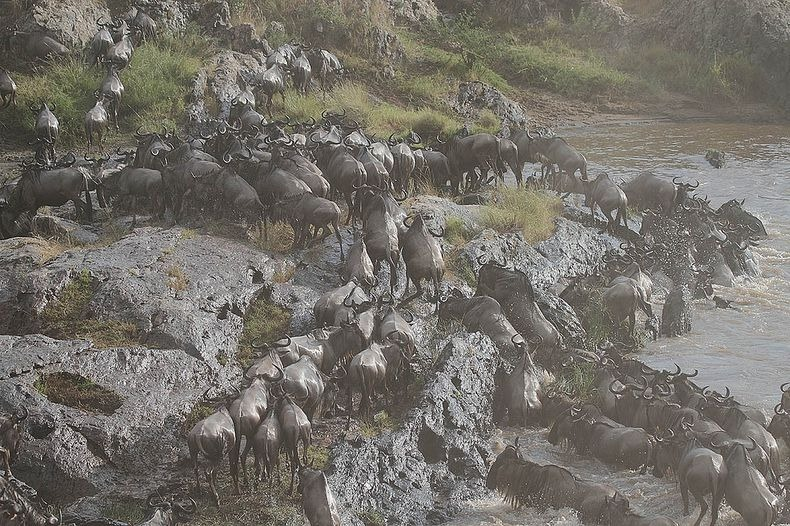 mara-river-crossing-3