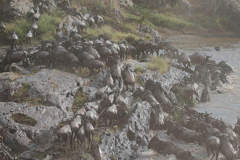 mara-river-crossing-3