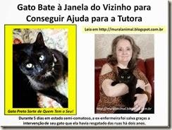 Gato_Bate_Janela_do_Vizinho_para_Conseguir_thumb_1_