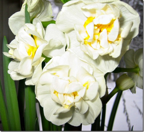 Narsissis bridal crown2