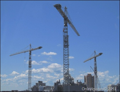 cranes0817 (2)