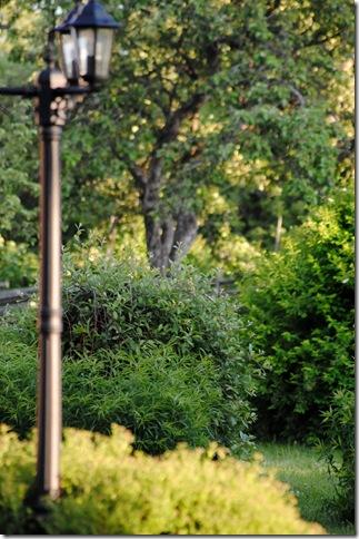 trädgården 072