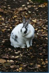 2011-11-28 Wildwood 116