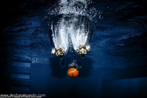 caes subaquaticos desbaratinando  (12)
