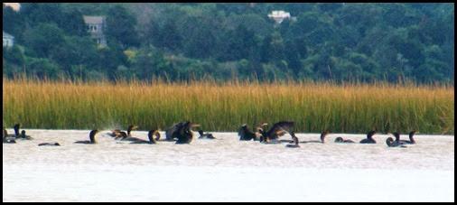 Kayaking Salt Pond & Nauset Marsh 112