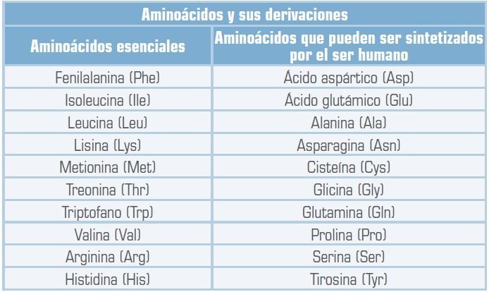 clasificacion aminoacidos