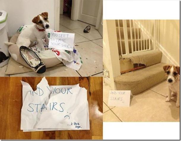 dog-shaming-bad-8