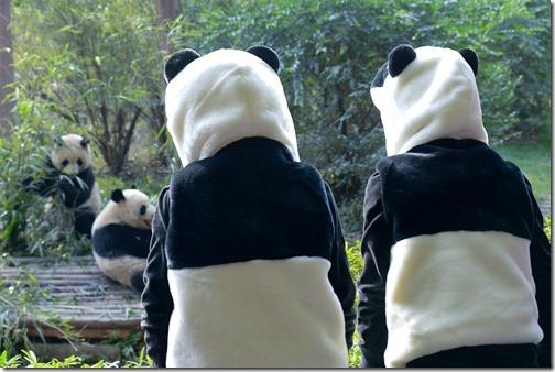 DSC_7140LR_Pandas
