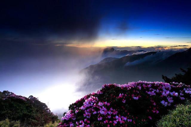 [flores-facebook-tumblr-rosas-las%2520flores-fotos%2520de%2520flores-737%255B3%255D.jpg]
