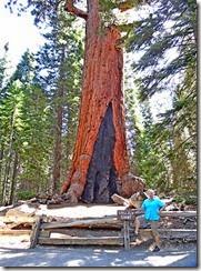 Yosemite Nat Park 017