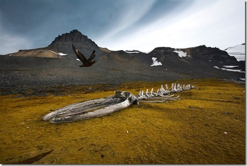Antarcticawildlife_thumb1