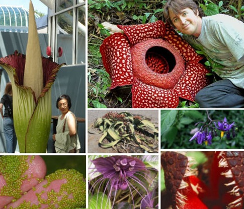 7 Wonders of the Plant World Bizarre Blooms