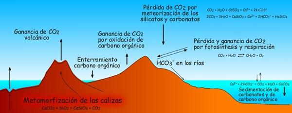 ciclo-del-carbono-dibujo