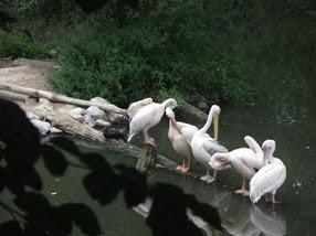 zoológico de Lille