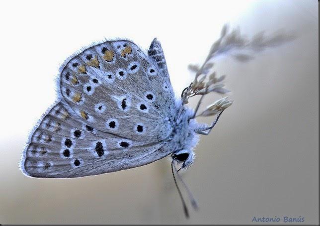6 Mariposa _DSC1334x1