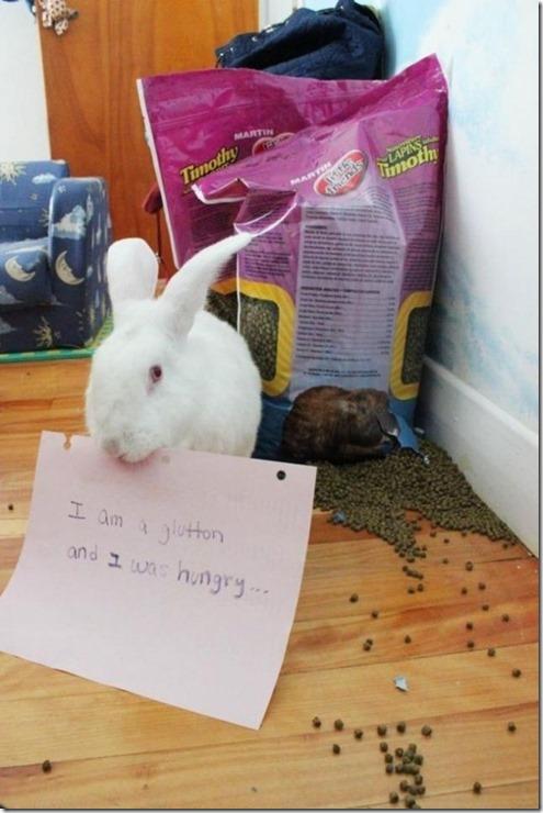bunny-rabbit-shaming-6