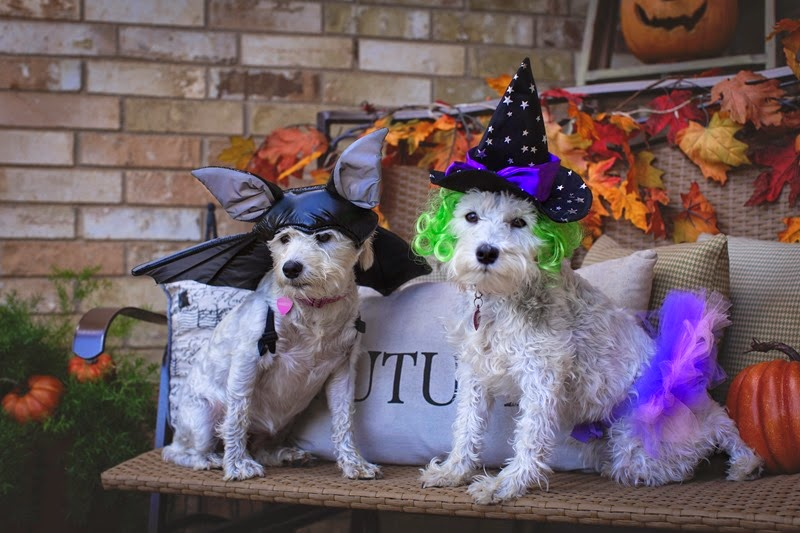 Halloweendogs2