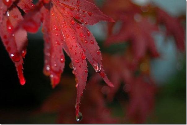 Lindas fotos da chuva (17)