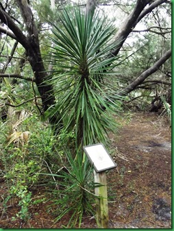 Gamble Rogers Nature Walk 021
