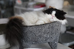 OMG!  Look at Tang all curled up in Martha's molcajete - the bowl, or mortor, she makes guacamole in!