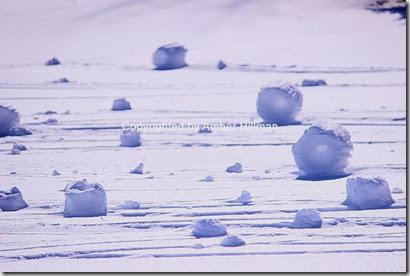 snowrollers1copy