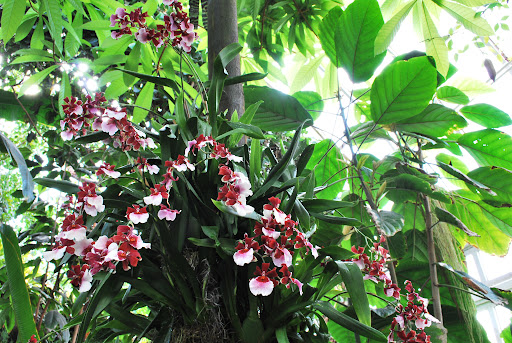 Some more beautiful orchids displayed in a tree.