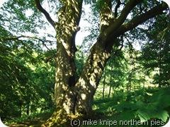 wesley tree 1