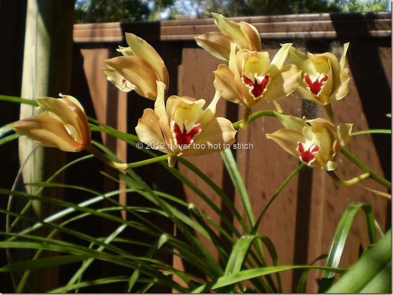 2012 orchid 2