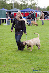 20100513-Bullmastiff-Clubmatch_30916.jpg