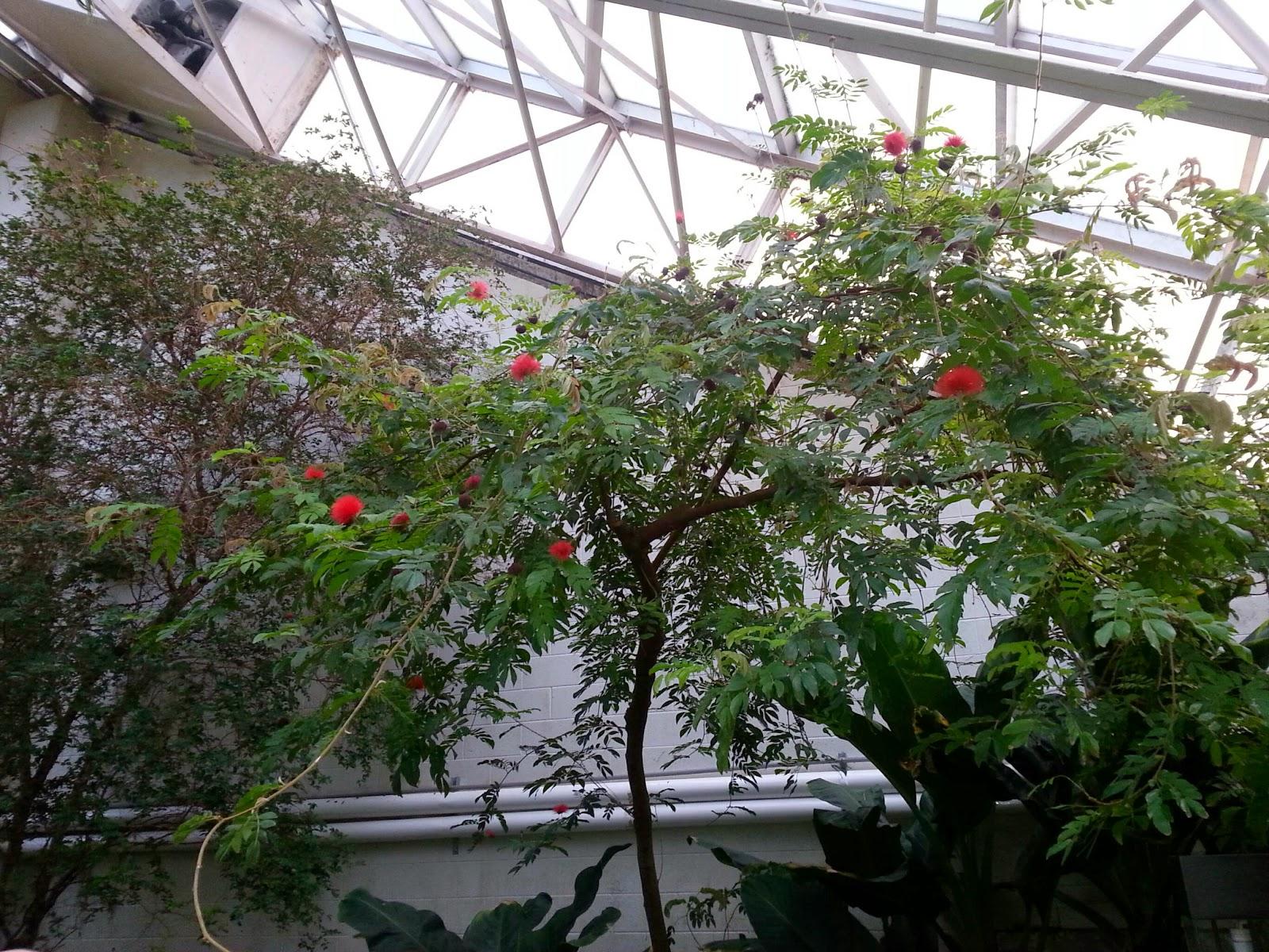 Fort Wayne Botanical Garden