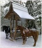 Вербилки. Фото С. Загребной.  www.timeteka.ru