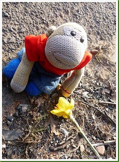 fallen Daffodil