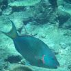 Buck Island Reef - IMGP1697.JPG