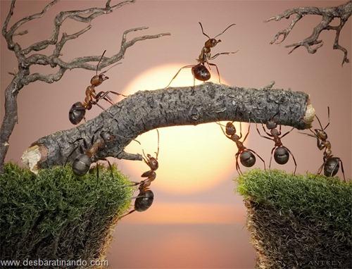 formigas inacreditaveis incriveis desbaratinando  (9)