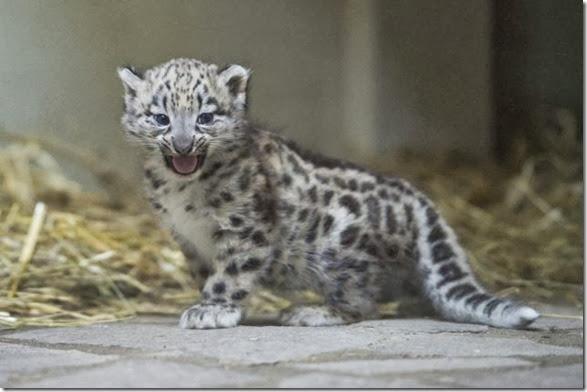 cute-baby-animals-3