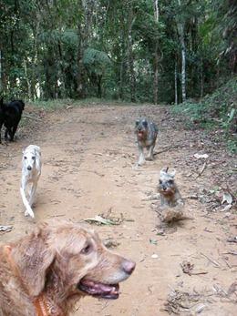 Dogs Trekking 4 (131)
