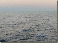 20121227_Dolphin Starboard Side (Small)