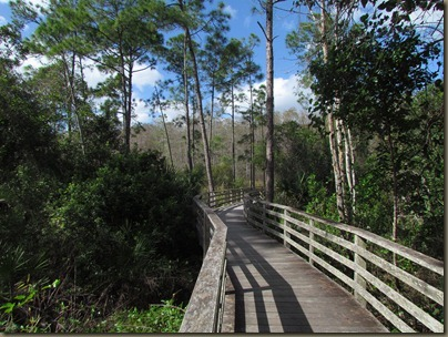 boardwalk at Corkscrew Swamp