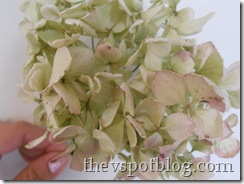 dried hydrangea, drying flowers