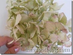 dried hydrangea, drying flowers