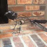 crow1a 007.JPG