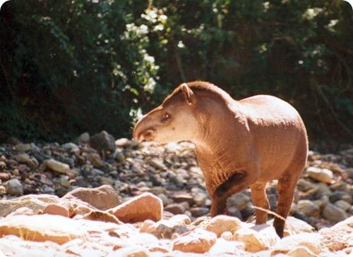 parque-nacional-el-rey pecari