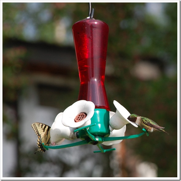 Hummingbird 1