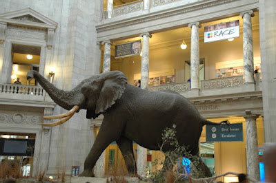 National Museum of Natural Historyの象